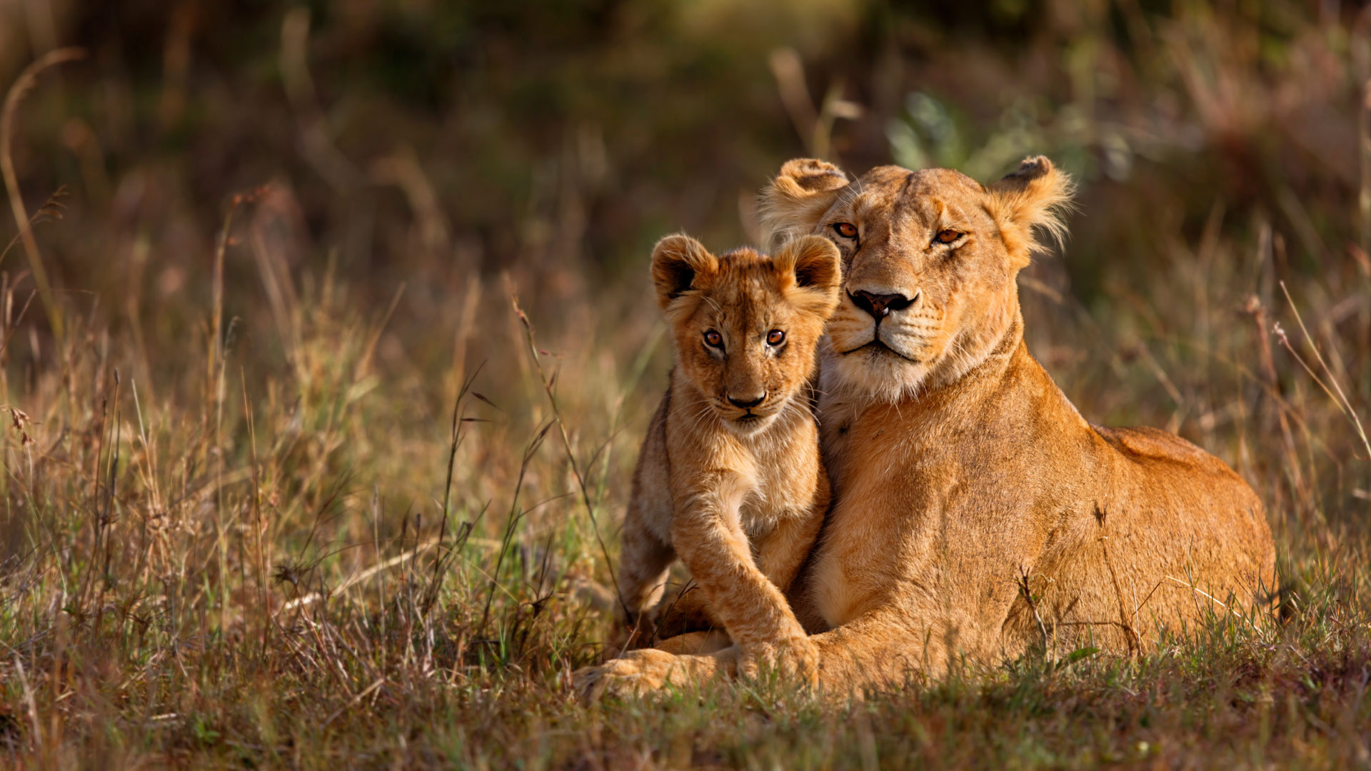 Luxury South African Safari