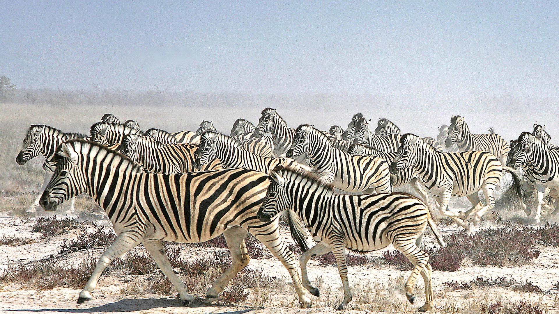 50 Words to Use on a Safari | Animal Collective Nouns