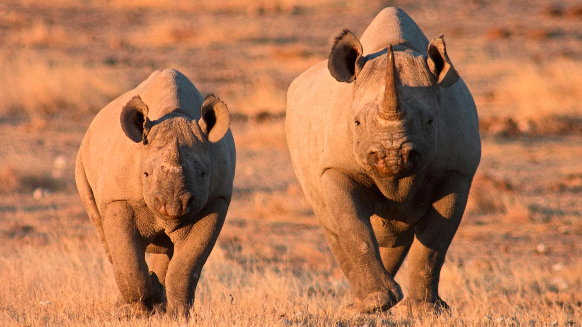 Skeleton Coast Namibia >> Safari Game Drive in Etosha National Park | andBeyond