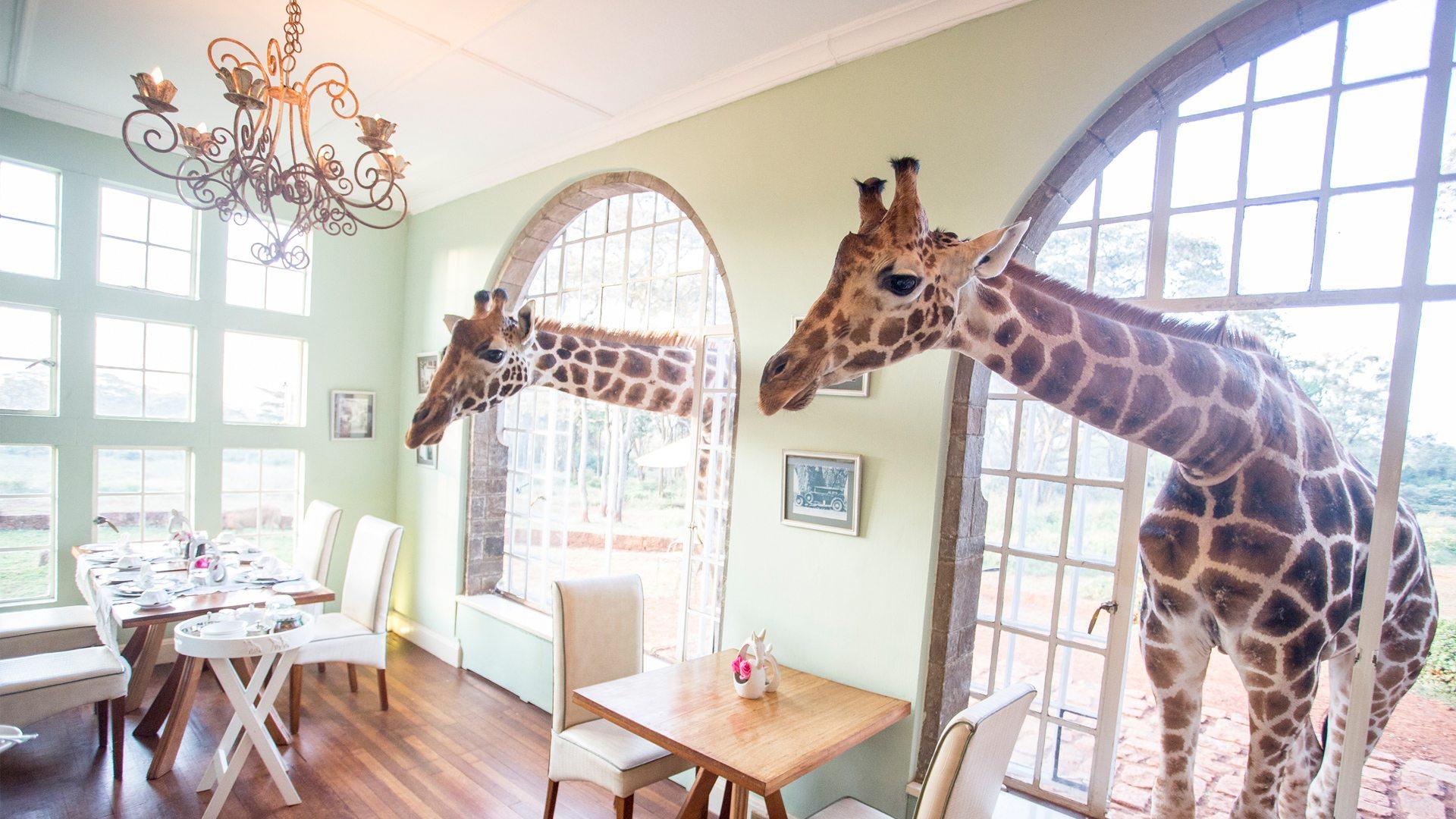 Giraffe Manor | The Safari Collection | Kenya | andBeyond