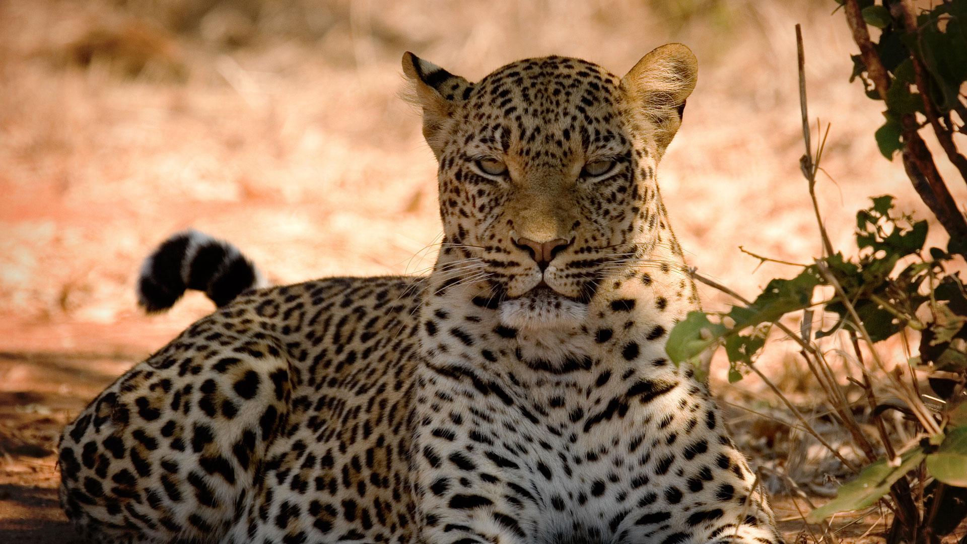 Discover Chobe National Park | Chobe River | andBeyond