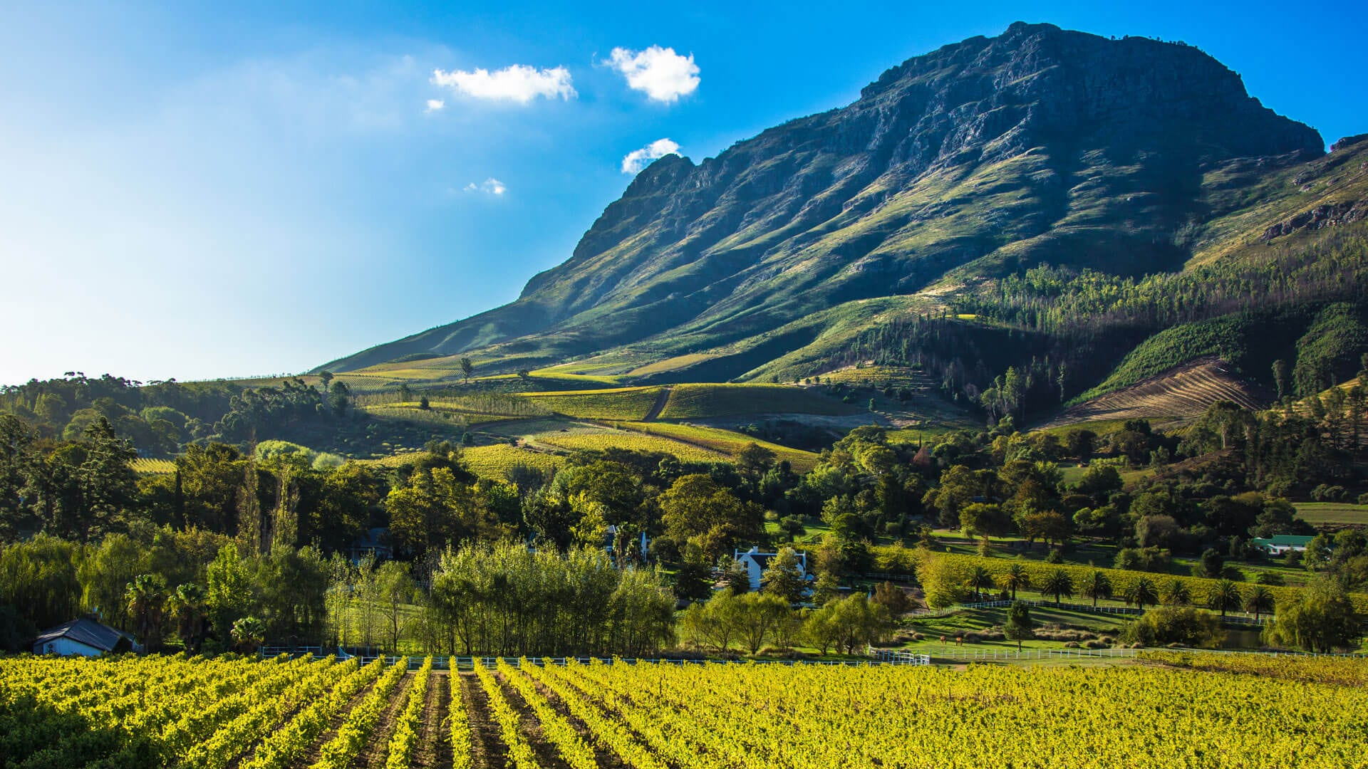 https://www.andbeyond.com/wp-content/uploads/sites/5/cape-winelands-south-africa.jpg