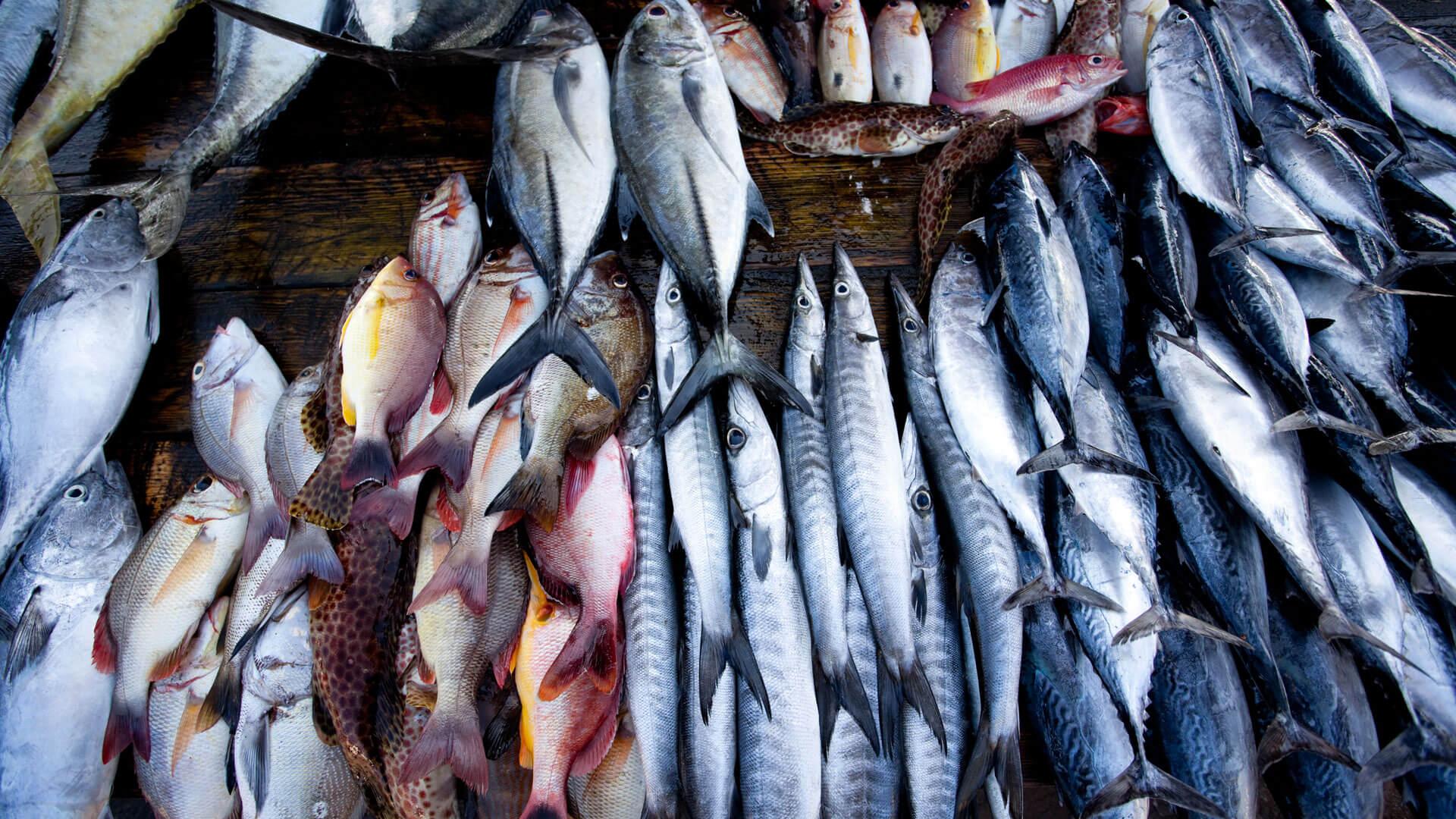 Galle Fish Markets   Sri Lanka   Galle   andBeyond
