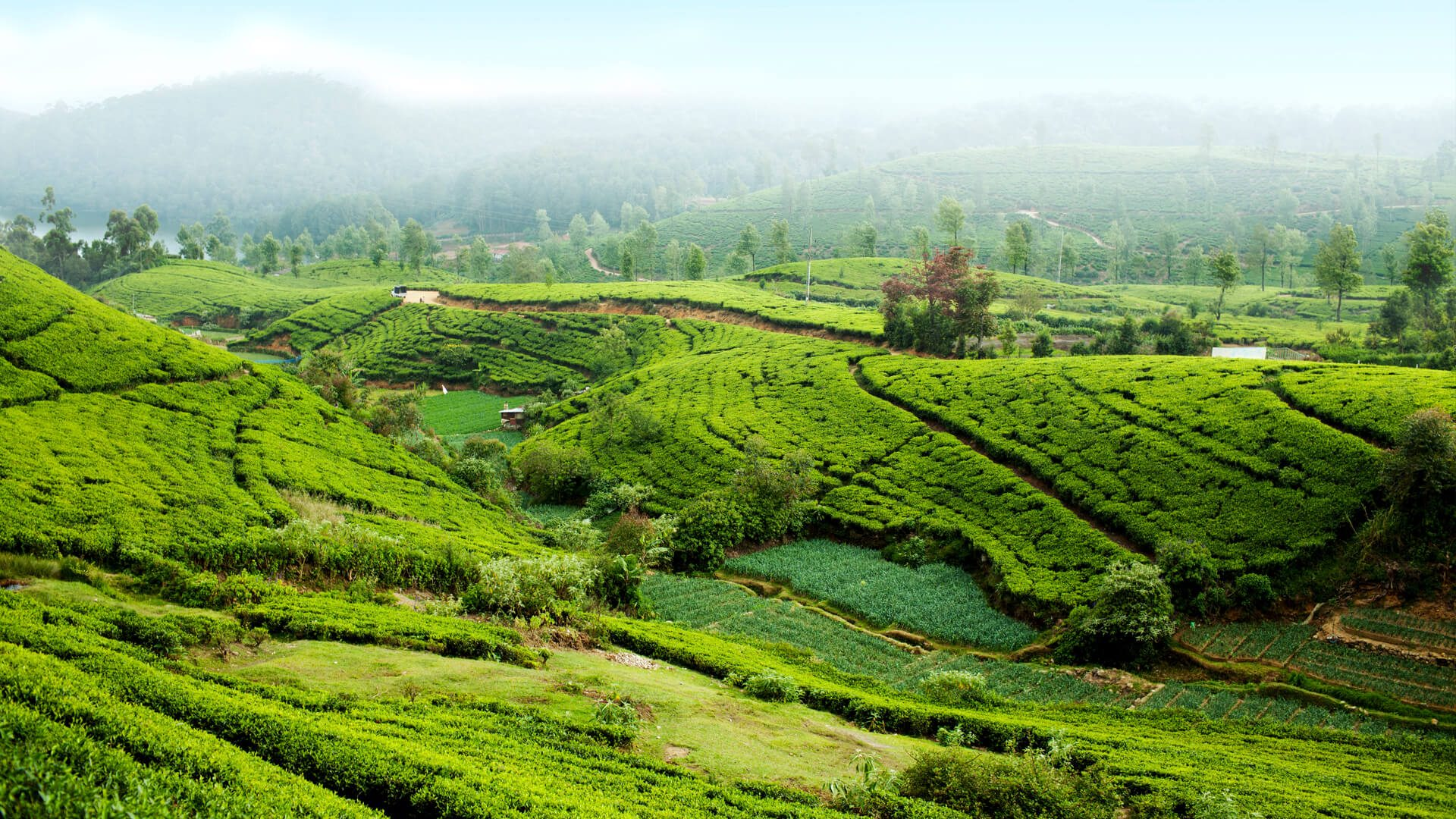 Tea Tastes Of Sri Lanka Taste The Country S Ceylon Tea