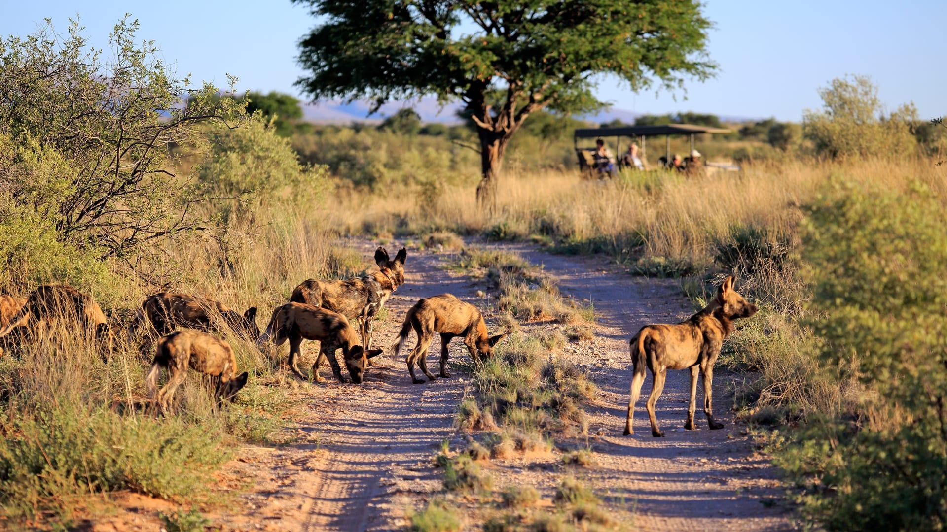 Safari Game Drive at Tswalu   Luxury African Safaris,South America ...